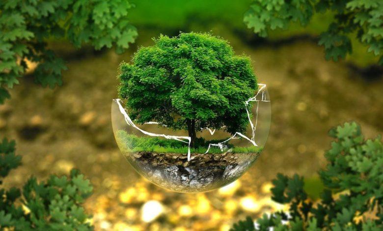 Colapso: síntomas de una crisis ambiental