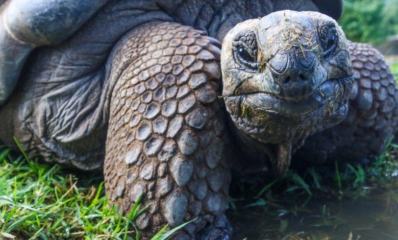 Animales en peligro de extinción y arte