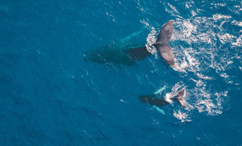 Ballenas y personas: un cortometraje sobre la magia del Pacífico