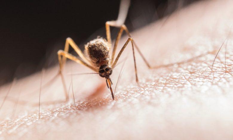 5 medidas para proteger a tu familia de la zoonosis