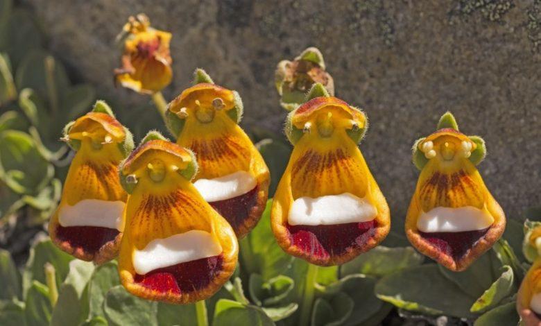 Descubre las 7 flores más raras del mundo
