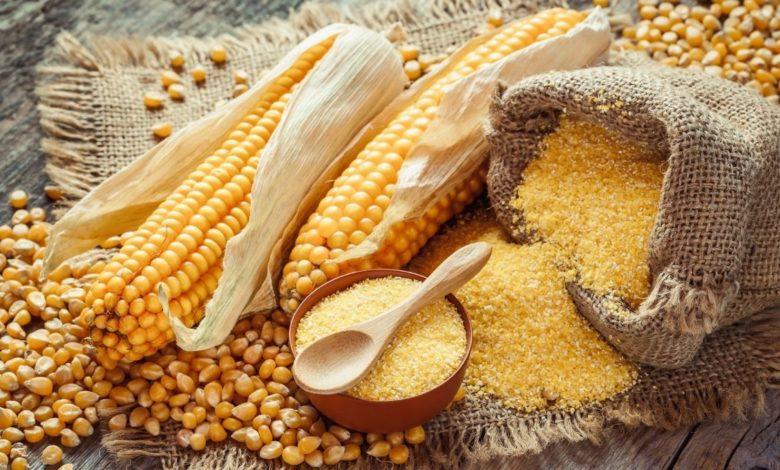 El maíz, alimento para el cuerpo y el alma